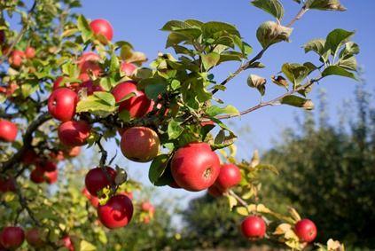 Fruit / Kruiden