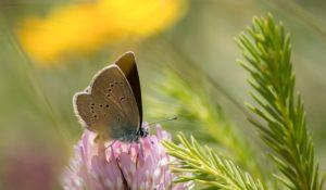 Hoe belangrijk is behoud van biodiversiteit?.greenlink