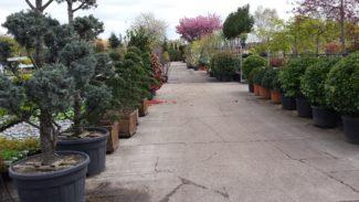 certificaatuitreiking plantenkennis.greenlink