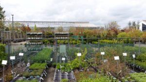 Basiscursus Plantenkennis van start