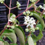 Planten herkennen en benoemen.greenlink