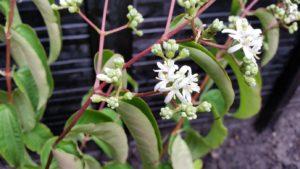 Planten herkennen en benoemen