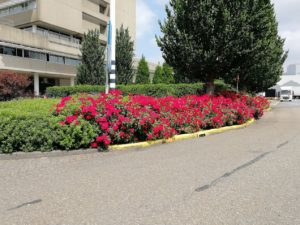 bomen over rozen. greenlink