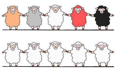 Waar zijn de schapen?